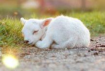 Cute Fauna