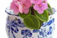 Glorious Garden Ideas / by Gloria Fragoso