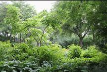 garden / by Falon Land Studio