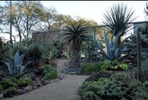 Desert gardens / Plants and gardens for Texas- humid and arid climate zones / by Falon Land Studio