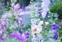 * Garden * / by Mirjam Schuurman-Haan