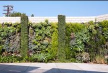 grow vertical: living walls / Vertical gardens and living walls. / by Falon Land Studio
