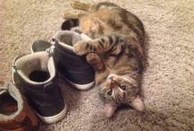 Schoenenfetisjist / Onze kater Freddie houdt van gênante poses, eten, slapen en... schoenen.