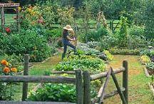 veg garden inspiration