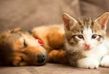 Dogs and cats / Chiens, chats, animaux