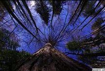 Ağaç Resimleri / Ağaç Resimlerinden peyzaj ağaçları, hızlı büyüyen ağaçlar, yapay ağaçlar, meyve ağaçları, ağaç ev, çabuk büyüyen ağaçlar, ağaç türleri, sonbaharda ağaç resimleri benzeri konulardaki en güzel ağaç resimleri ni sizler için derledik, birbirinden güzel ağaç resimlerine aşağıdan ulaşabilirsiniz.  http://kpssdelisi.com/agac-resimleri/