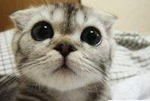 Kedi Resimleri / Kedi Resimlerinden komik kedi resimleri, en güzel yavru kedi resimleri, tatlı yavru kedi resimleri, en güzel kedi resimleri, dünyanın en güzel kedi resimleri, kedi türleri benzeri konulardaki en güzel kedi resimleri ni sizler için derledik, birbirinden güzel kedi resimlerine aşağıdan ulaşabilirsiniz.  http://kpssdelisi.com/kedi-resimleri/
