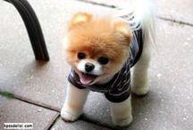 Köpek Resimleri / Köpek Resimlerinden sevimli köpek resimleri, komik köpek resimleri, şirin köpek resimleri, küçük köpek, tatlı köpek, yavru köpek, köpek cinsleri, en tatlı köpek resimleri benzeri konulardaki en güzel köpek resimleri ni sizler için derledik, birbirinden güzel köpek resimlerine aşağıdan ulaşabilirsiniz.  http://kpssdelisi.com/kopek-resimleri/