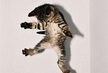 |Cats| / Meow.
