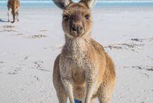 |Australia| / Boy, how have I survived?