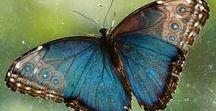 Butterflies, Dragonflies, Caterpillars and Moths