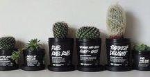 plants / green friends.