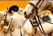 The Royal Andalusian School of Equestrian Art / Real Escuela Andaluza del Arte Ecuestre