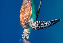 Ocean Life & Biodiversity
