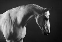 Mark Harvey Horses / A selection of fine art limited edition pieces from Mark's 'Horse' portfolio. #horse #horses #horsephotography #markharvey