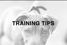 Taming and Training