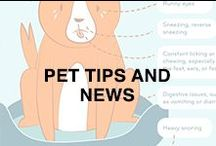 In The World of Pets