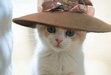 BABY CATS / Para quem ama =^^=
