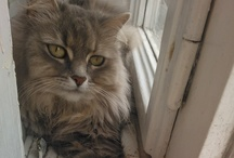 """Cat Cucina / My cat name is Cucina, this name comes from Czech word """"cucek"""", it means tuft."""