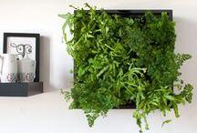 Karoo Vertikaler Garten Green Wall