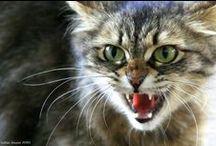 Cats / Piękne, tajemnicze koty...