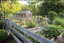 Gardens and tree houses / Places that are filled with life and full for living