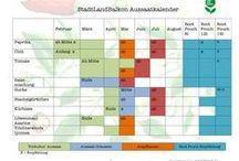 Aussaat / Samengut , Tipps für die Ausssaat , Kübelpflanzen , Urban Gardening, Gemüse, Blumen , Kräuter