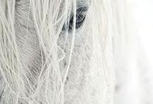 Horses / fotografie di cavalli