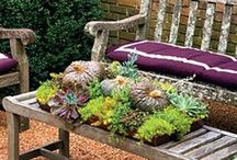 Beautiful Gardening Ideas / All of the gardening and planting ideas