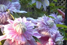 """Flowers / """"I like this place and could willingly waste my time in it.""""  ― William Shakespeare"""