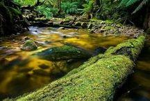 Luonnonläheisyyttä / Connection to nature / Kivi, puu, rakenteet, yhteys luontoon.