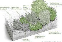 Sadepuutarha / rain garden / Sadepuutarhat, hulevesien hallinta.