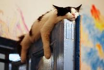 Cats / by Clementine Veltman-Westland