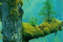 Árvores e Sabedoria / The Green in me.