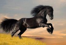 Horses / by Monica Skrum