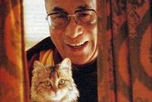 Famous People & Cats