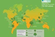 La forêt de Léa / Depuis 2007, LÉA NATURE finance des programmes de reforestation avec un objectif d'1 million d'arbres replantés d'ici 2020. LÉA NATURE a déjà replanté 800 000 arbres en Asie, Amérique Latine, Afrique et en France.