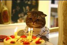 Animal Birthdays / Parties!