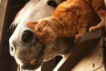 Horses & Friends
