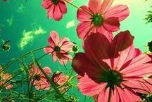 Le printemps by Léa / Vive le printemps ! Accueillons la saison du renouveau : la nature se réveille, les bourgeons éclosent, les fleurs apparaissent. C'est aussi la saison propice au jardinage et aux promenades au grand air.