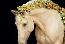 Horses - Braiding