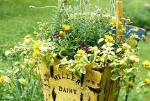 Gardening and Outdoor Stuff/Ideas / by Marie Muckey