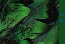 Emerald Envy / #EmeraldEnvy #Zobha / by Marie Muckey