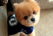 4-Legged Fans / The furry friends of #CowboysNation  / by Dallas Cowboys