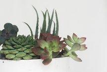 . PLANT .