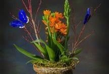 Mothers Day / Mothers day flower and plant arrangements