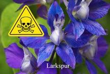 Images of Flowers and Plants Poisonous to Dogs and Cats / Images of Flowers and Plants Poisonous to Dogs and Cats.