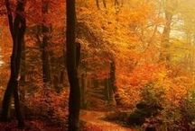 AUTUMN TIME / Discovering the beauty of the season....