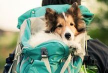 Hiking/Camping / Hiking trips and hacks for humans and dogs.