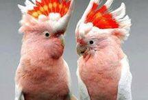 Birds & Bird Care / Birds and Bird care.